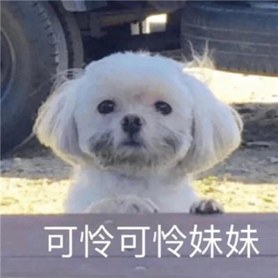 狗狗沙雕表情图片搞笑 关于狗的聊天表情包2020