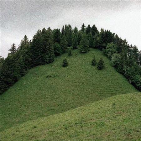 绿色清新文艺图片素材 好看的绿色系意境图片